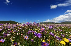 Ecological Protection of Grasslands in Zoige County