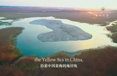 Amazing China: The perfect stopover for migratory birds