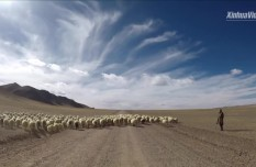 Couple help lift villagers out of poverty in Tibet