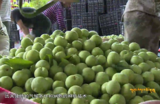 Fruit Industry Promotes Economic Development in Wenchuan County