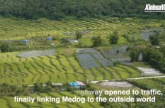 Residents grow tea to escape poverty in Medog, China's Tibet
