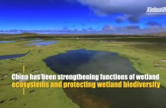 China makes headway in wetland conservation