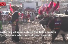 Spring plowing in Tibet braces for farm implement upgrade