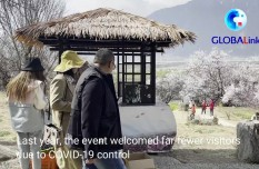 Peach blossoms usher in spring for Tibetan tourism