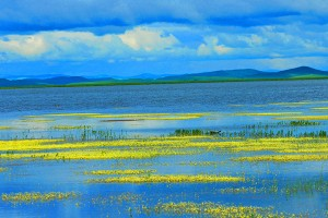 Natural Beauty of Zoige County's Flower Lake
