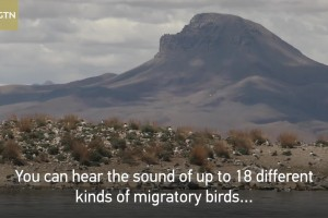 Birds surges in world's highest-lying bird island