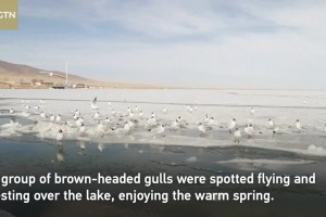 Qinghai Lake, China's largest lake starts to thaw
