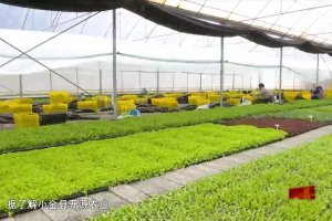 Green Development of Agriculture of Xiaojin County