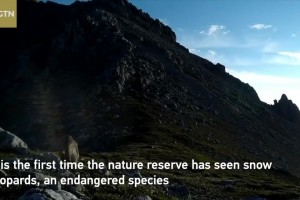 Snow leopard spotted for the first time in Gahaizecha Nature Reserve