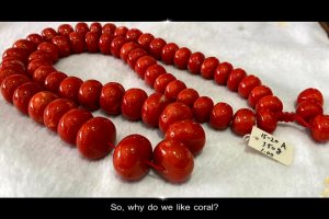 Story of Red Coral