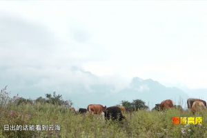 Wenchuan County Integrates Agriculture and Tourism