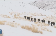 Chinese armed police receive training in Tibet