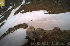 Infrared cameras capture seven wild animal species in NW China