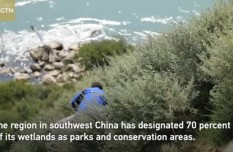 Tibet achieves great success in ecological protection