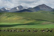 Tibet-Qinghai cooperation launches tourism projects