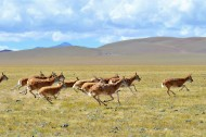 Tibet heavily invests in ecological construction