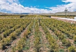 Tibet's alpine area turned into oasis: afforestation pays off in Nagqu