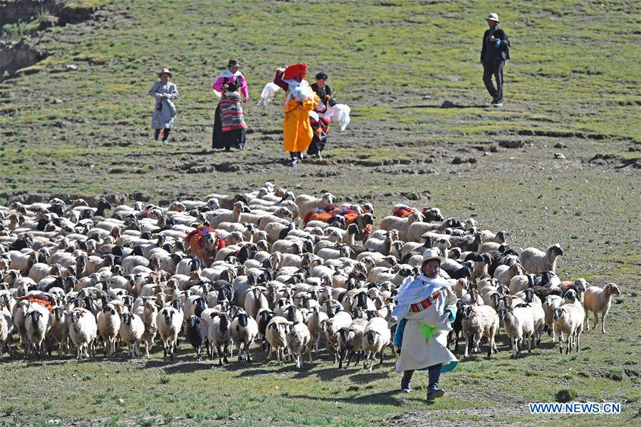In pics: sheep show in China's Tibet