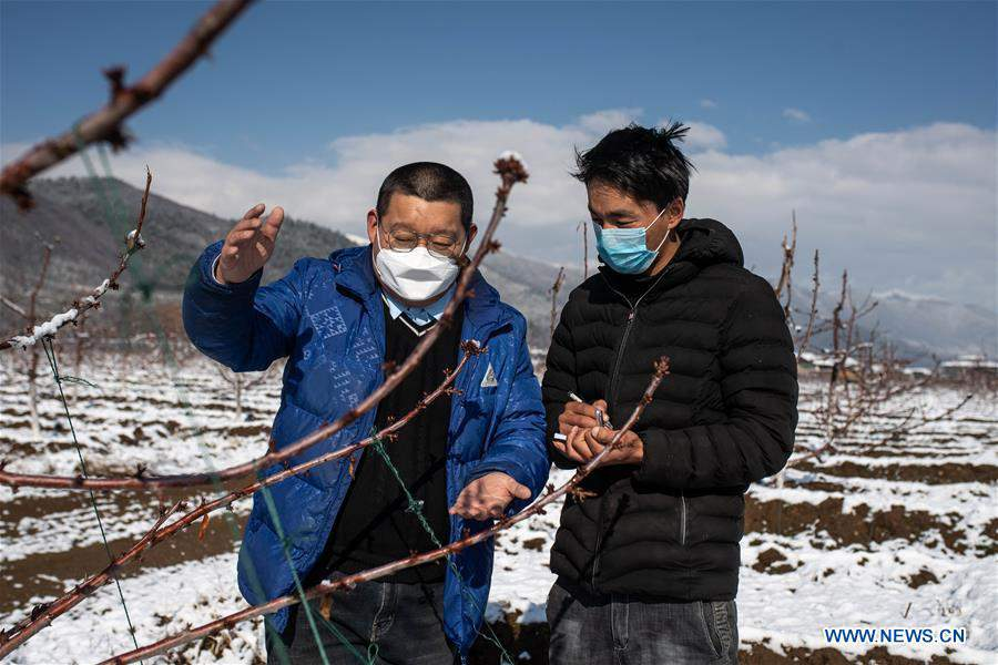 Poverty-stricken Diqing in Yunnan takes measures to ensure safety of people returning to work