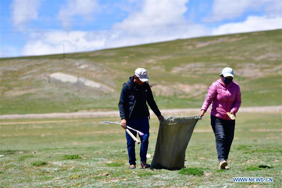 People take efforts to maintain ecological security in Qinghai