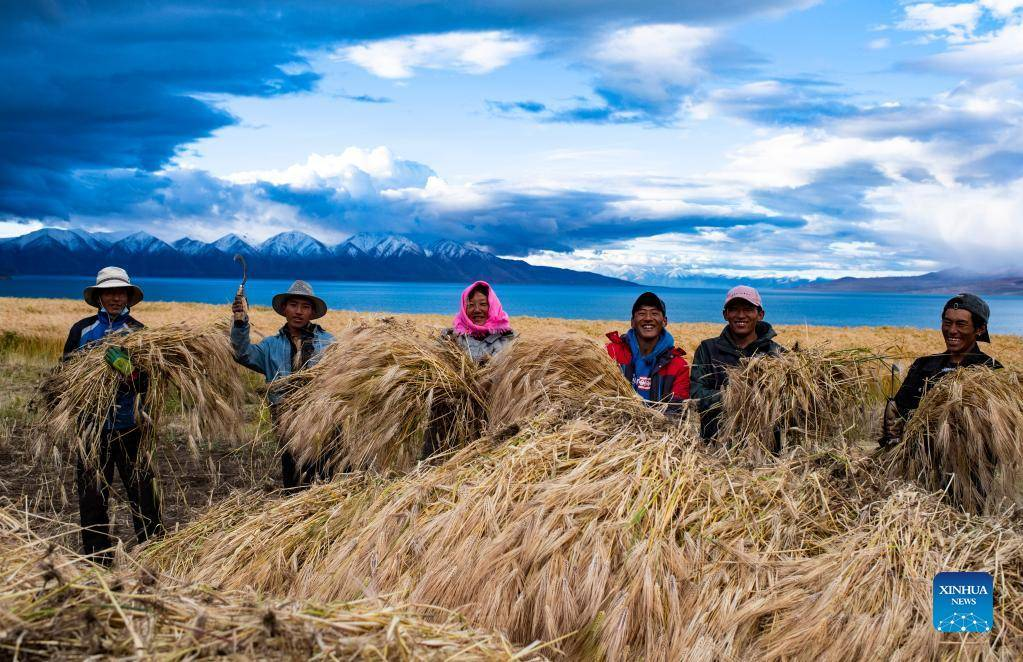 Villagers harvest highland barley at Ombu Township in China's Tibet (II)