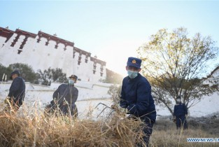 Weeds removed from surroundings of Potala Palace for winter fire prevention in Tibet
