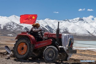 Start of spring ploughing marked at Beicun Village, Tibet (II)