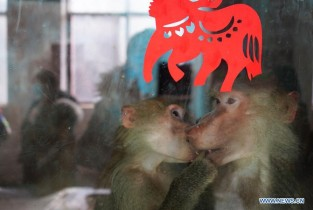 Qinghai-Tibet Plateau Wild Zoo organizes activity to celebrate upcoming Chinese Lunar New Year