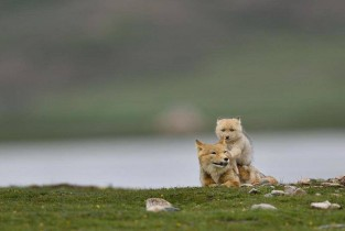 Exhibition held to showcase richness of biodiversity in NW China's Qinghai