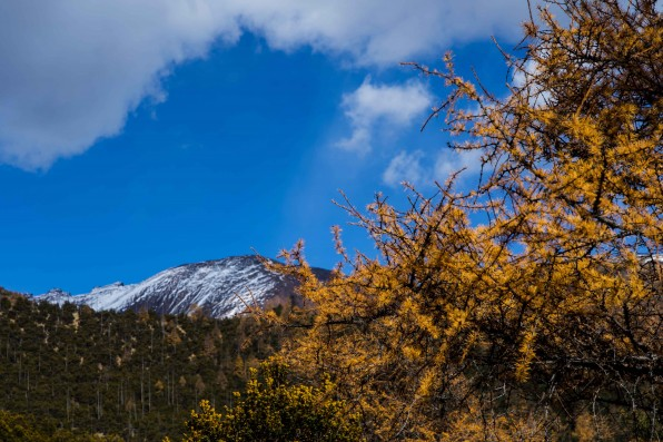 Baima Snow Mountain Nature Reserve shows off year's best season