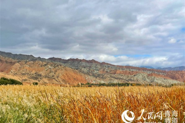 In pics: picturesque autumn scenery along Yellow River in NW China's Qinghai
